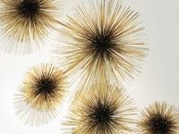26 Best Surchin Urchin Cool Sea Urchin Inspired Decor