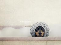 All things dachshund