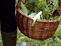 FORAGING WILD FOOD