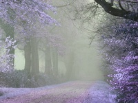 Intriguing Photos of Misty Moments