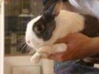 dieren: konijnen en hazen