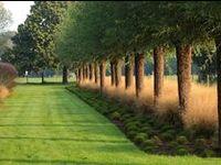 spaceful & linear gardenarchitecture