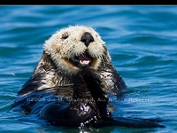 Otters...Cousin to the Ferret...