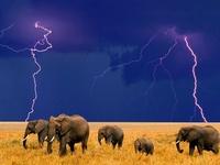 Elephants are awesome!!