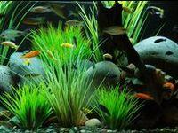 fish, freshwater, saltwater, corals, water, aquariums, fish tanks, underwater