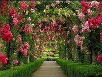 Floral Fantasy, Gardening & Exteriors