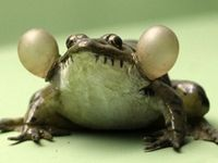 What's not to like about frogs, lizards and more interesting things!