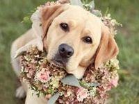 Wedding Pets.