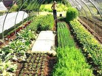 Gärtnern