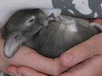 Rabbit care, breeds, photos, diy hutches