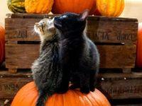 Halloween / Autumn