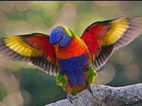 ALL BIRDS, HAWK'S OWL'S PARROTS ETC