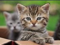 CUTE & ADORABLE KITTEN'S & CAT'S