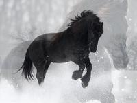 Horses- 2 U Moe