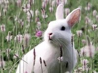 """""""Bunnies are cuddly, the large and the small. But I like the chocolate ones the best of them all."""" Author unknown"""
