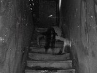 #paranormal #ghosts #horror #scary #fear #spirits #otherside #dead #death #spooky #creepy #haunting #haunted