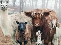 Farm Animals - livestock
