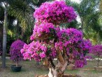Beautiful Flower's...Roses...Mushroom's & Tree Creations