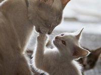 Pups & Kitties