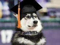 R Beagles Smart 87 best images about D...