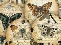 Papers - Butterflies