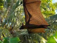 Bats & Fledermäuse