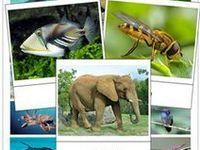 Tiere/ DIY, Bilder