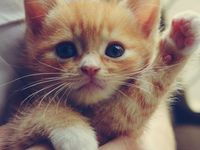 Adorable Animals! <3