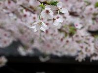 御射山公園(Kyoto, Japan)