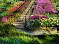 Beautiful flowers, flower gardens and beautiful trees... Please only pin 10 pins a day from my boards if you DO NOT FOLLOW ME
