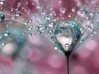 Phenomenal Photographs