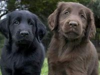 Adorable Animals :)