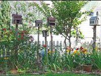 BIRD & BUG Habitat