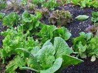 gardening, plants, vegetables, fruits, herbs, edible garden, greens, tips, seeds, veggies, container gardening, Indoor gardening