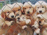 i luv puppies