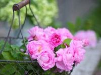 gardens, flowers, outdoor spaces, butterflies, bees, dragonflies, lady bugs, frogs, garden benches, peonies, hydrangea,