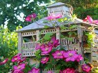 birds, birds nest, nests, bird eggs, eggs