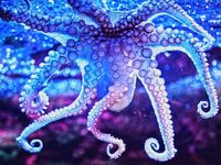 All things tentacled, artwork, nature pics and Cthulhu mythos