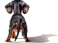 Nina  (I ❤️ dachshund)
