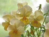 Mis Flores, naturaleza...