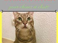 chiens et chats / dogs & cats / Vous y trouverez des informations utiles et pratiques sur les chiens et les chats : accessoires, alimentation, friandises, dangers, comportement, jouets, soins, vacances, aliments toxiques, pet friendly, prévention, santé   Astuces chat - astuces chien Conseils chat - conseils chien  Pour des informations et conseils sur les chiens et les chats :  ▪️blog : http://confidencescelesteetetoile.fr ▪️instagram rdv sur les stories : https://www.instagram.com/pet_sitter_montpellier/ ▪️page Facebook : https://m.facebook.com/Ana-pet-sitter-services-animaliers-499473036772531/