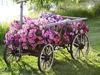 Flower Gardens,  Markets & Shops