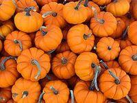 Autumn & Halloweenie