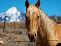 Animals/ranch life