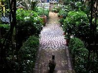 Secret Gardens / For those of us with a urban pocket-sized patch that we insist on calling our garden.