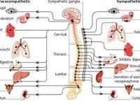EDS. Hypermobilitetsyndrom. Hypermobility syndromes