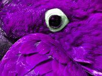 Anita Hewitt's Precious In Purple