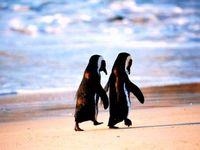 #penguins #lovelovelove