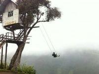 Tree House / Case sugli alberi