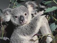 marsupiaux&monotrèmes
